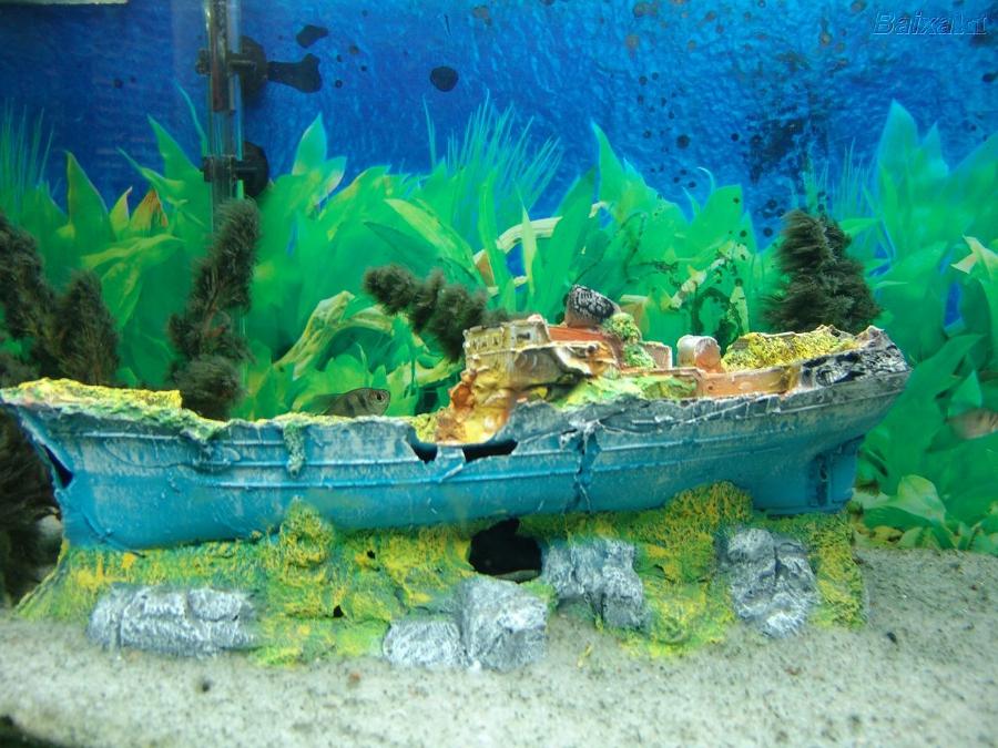 aquarios plantados9