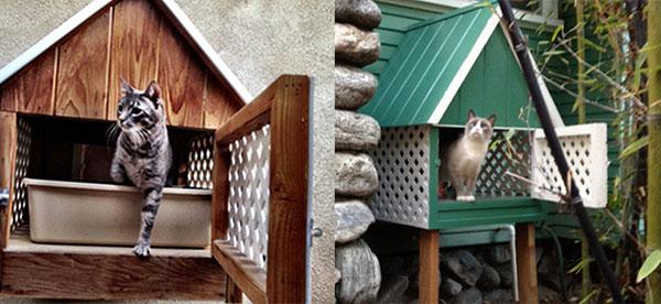 Banheiro de gato