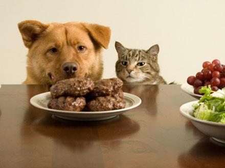 ração de cachorro e ração de gato