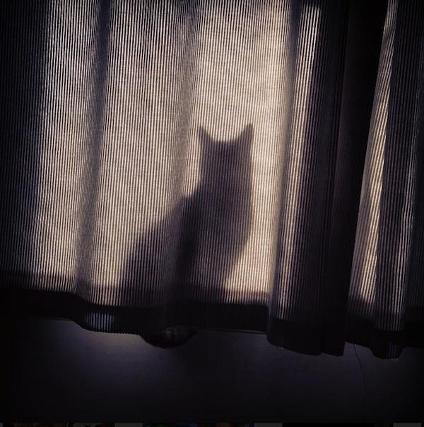 gatos que fracassaram na hora de se esconder