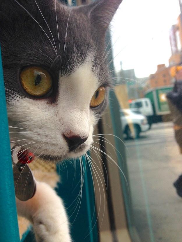 8Cafeteria de gatos