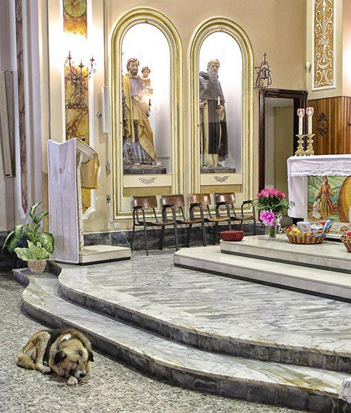 cachorro visitar a igreja