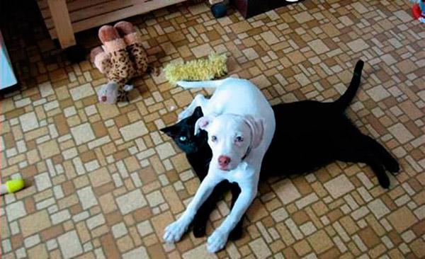 gatos sendo sacaneados