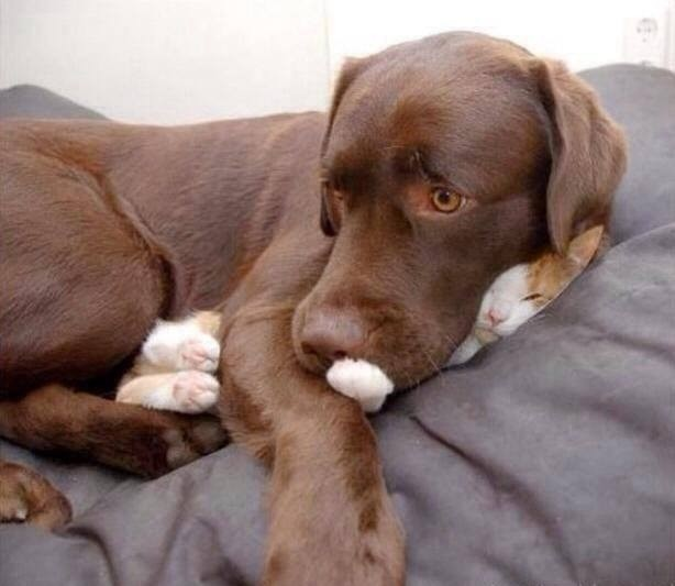 cachorros-provocando-gato-8