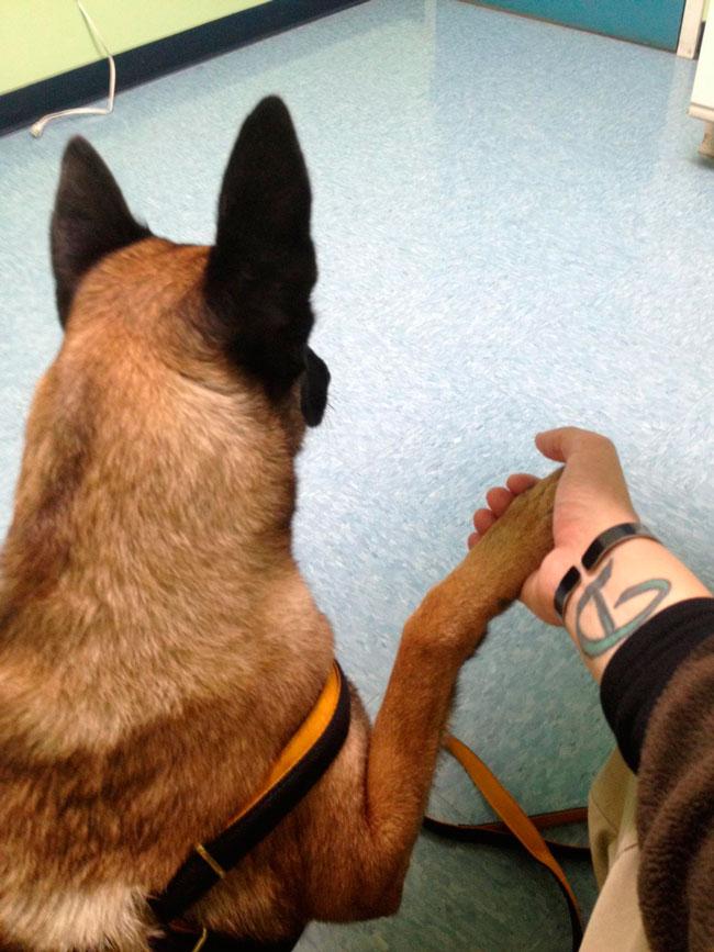 cachorros-veterinario-12
