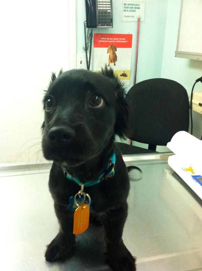 cachorros-veterinario-14