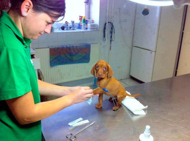 cachorros-veterinario-22