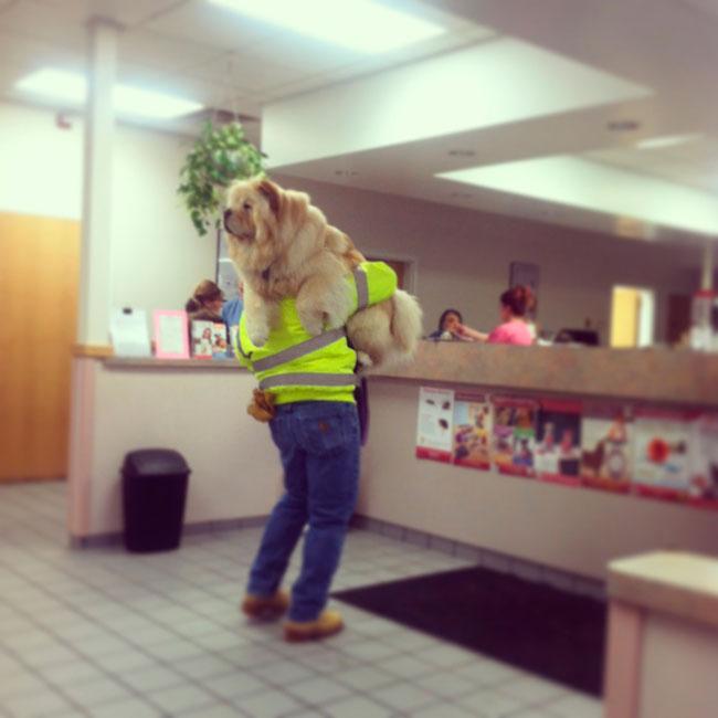 cachorros-veterinario-4