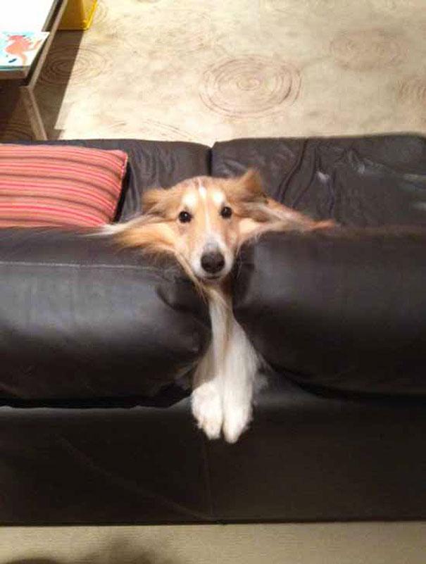 cães e gatos que não sabem usar a mobília da casa