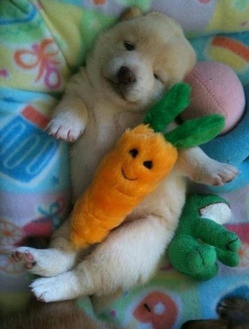 cãezinhos abraçados 4