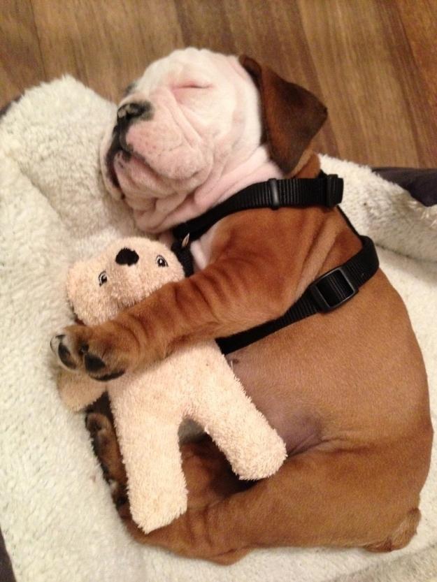 cãezinhos abraçados 5