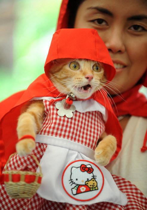 gatos inconformados