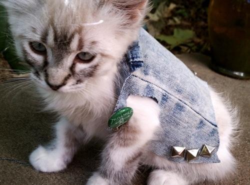 Gatos punks 7