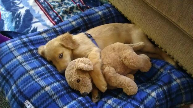 cãezinhos abraçados 7