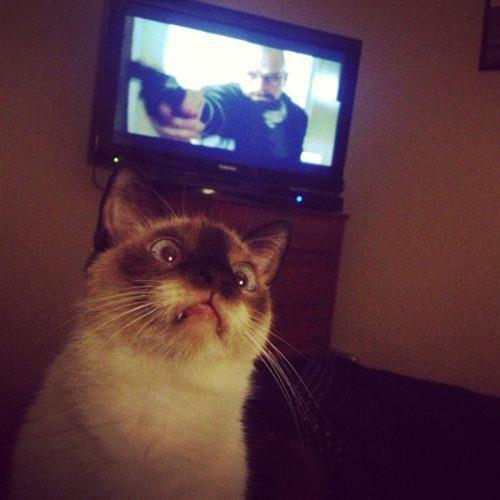 gatos desajeitados