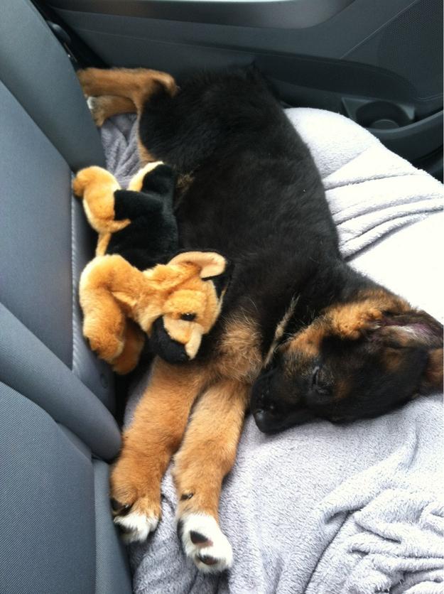 cãezinhos abraçados 8