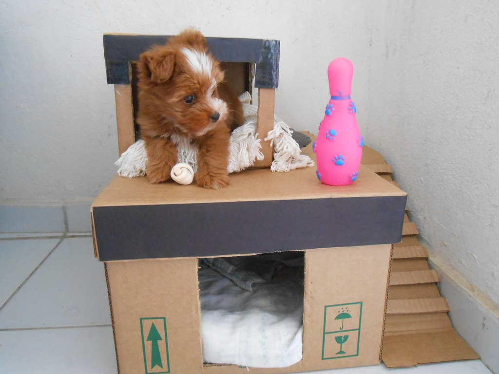 mansão de cachorro