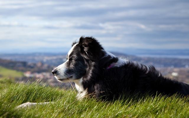 todo dono de cachorro deve saber