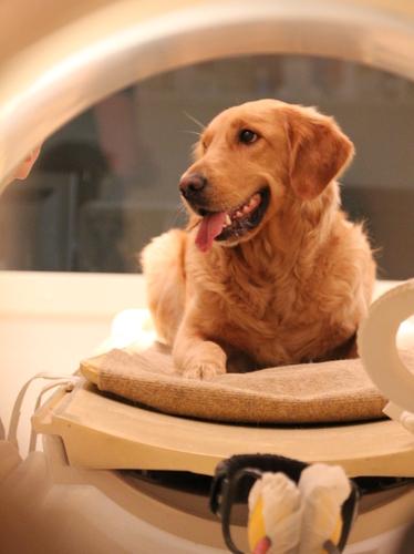 cães podem detectar nossas emoções