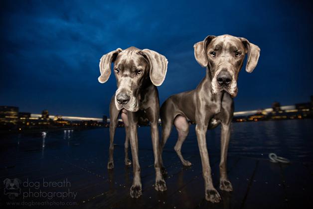 11 fotos de cães