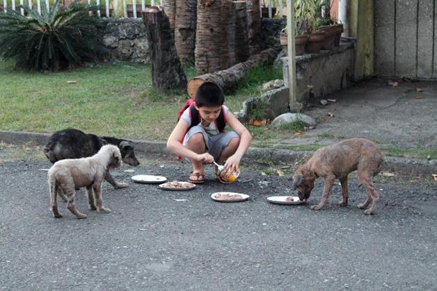 12 cães de rua