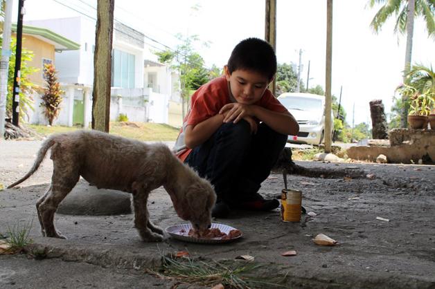 cães de rua 1
