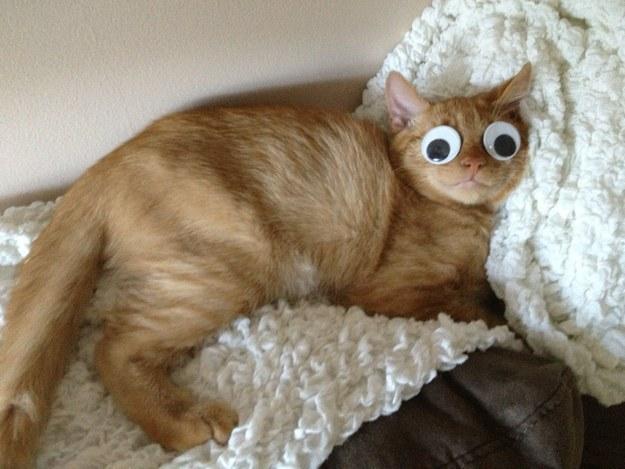1 sonecas de gato