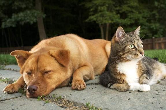 1 coisas sobre gatos
