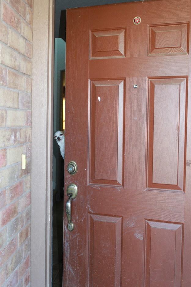 2o desconfiado tipos de cães