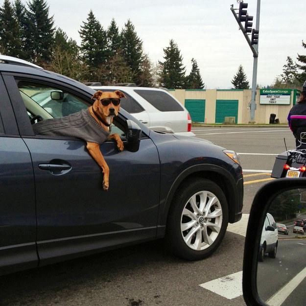 3 cães descolados