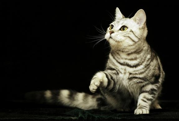 5 coisas sobre gatos