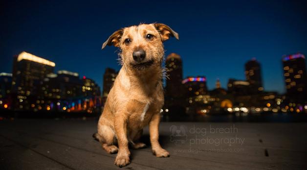 6 fotos de cães