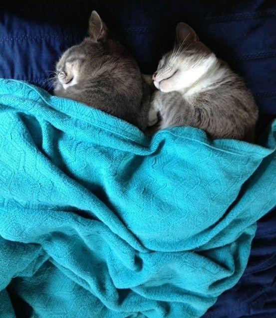 6 sonecas de gato