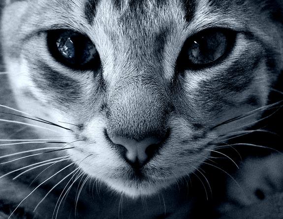 6 coisas sobre gatos