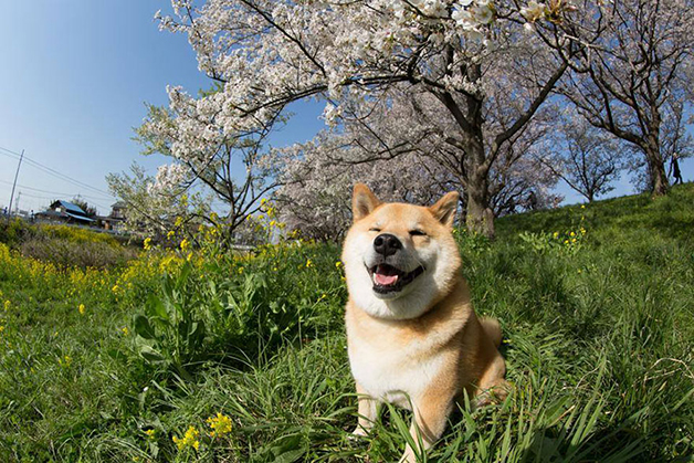 cachorro mais feliz