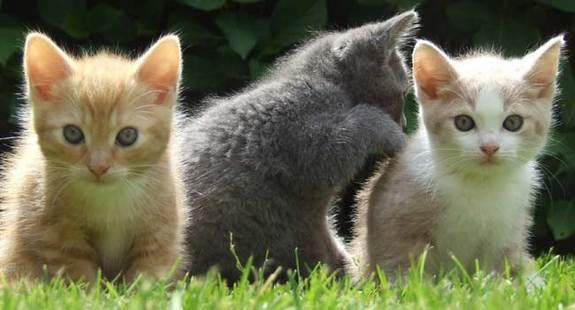 7 coisas sobre gatos