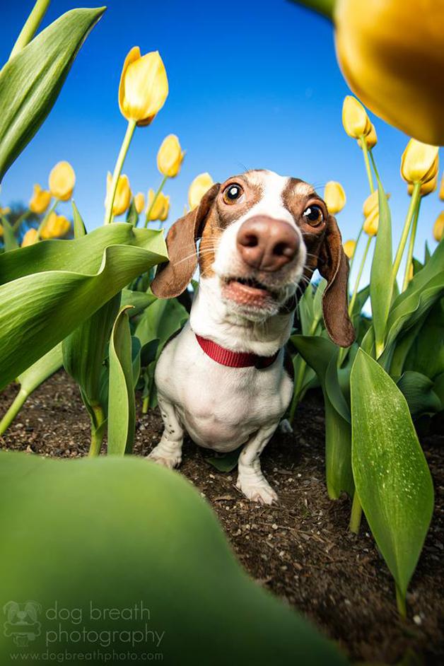 capa1 -fotos de cães
