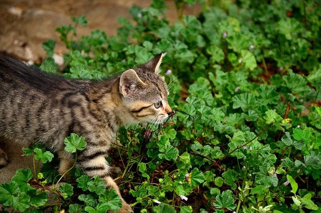vida secreta dos gatos