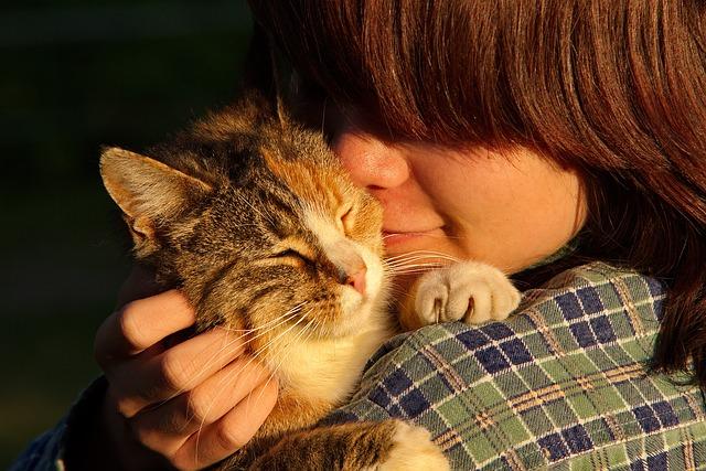 dono de gato