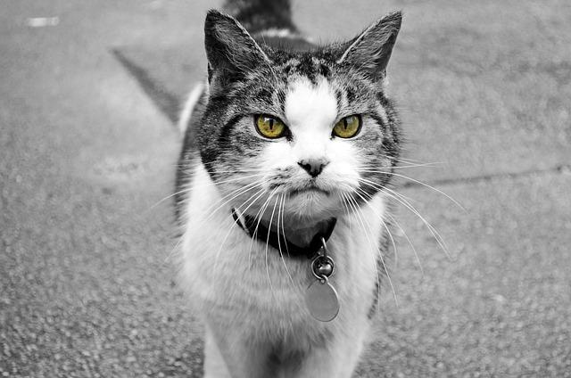 z vida secreta dos gatos