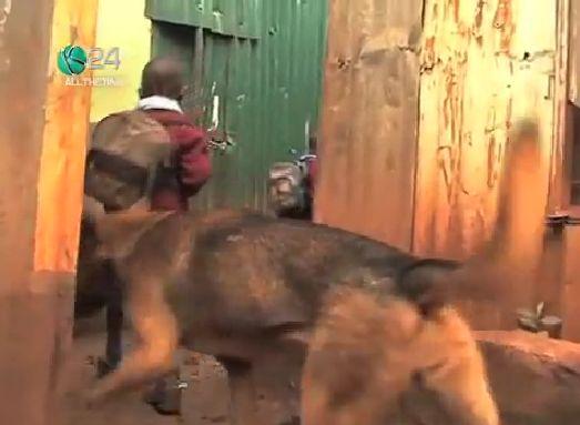 2 cachorra adota crianças