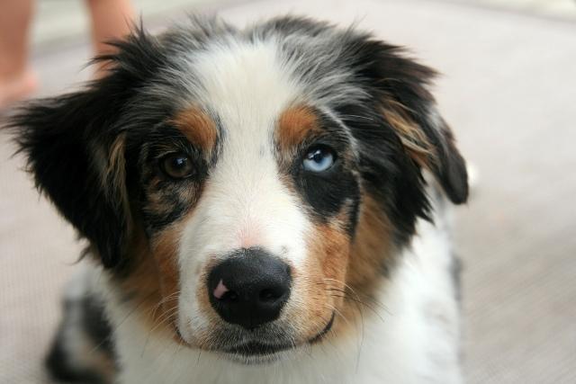 Cães lindos 3