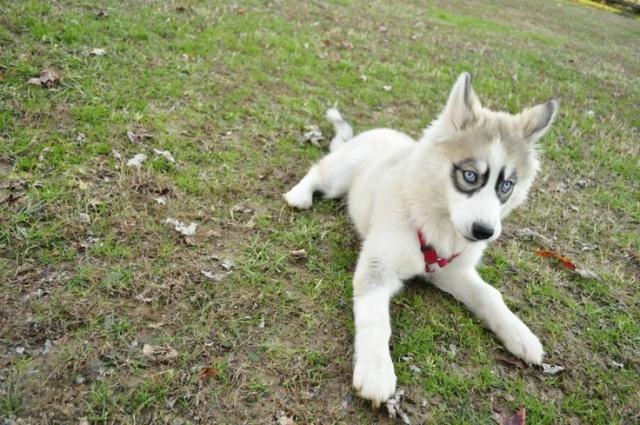 Lindos cães 7