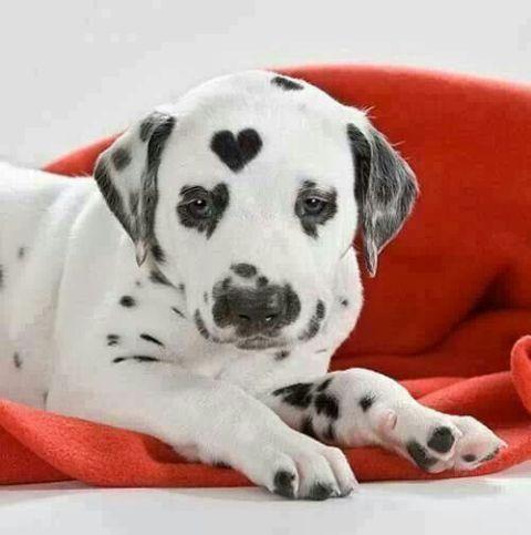 Cães 8