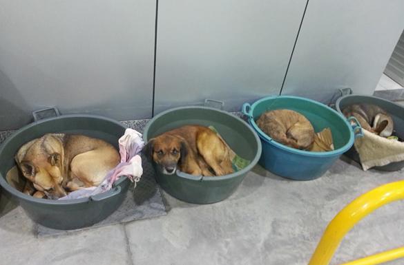 animais de rua durante o frio