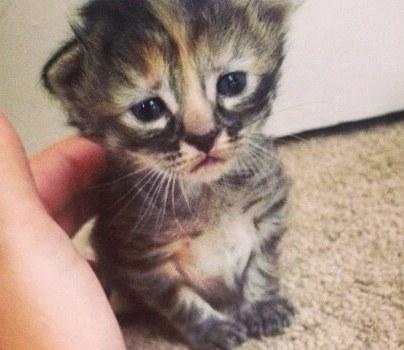 gato mais triste