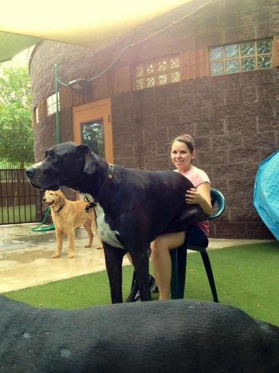 cão grande 1