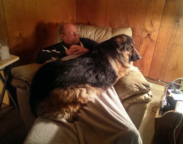 cão grande 11