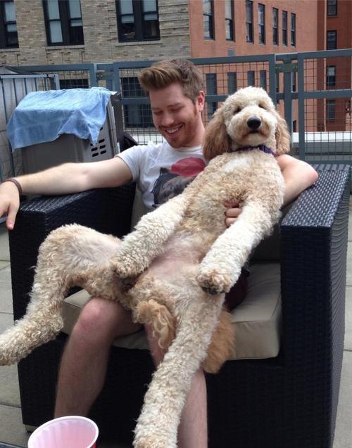 cão grande 13