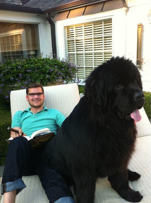 cão grande 14